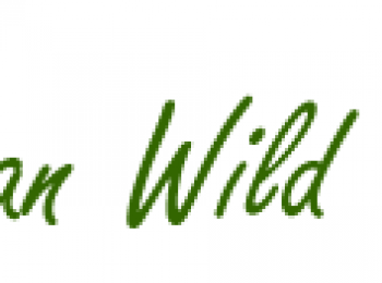African Wild Tours